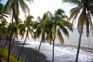 Sunzal Palms